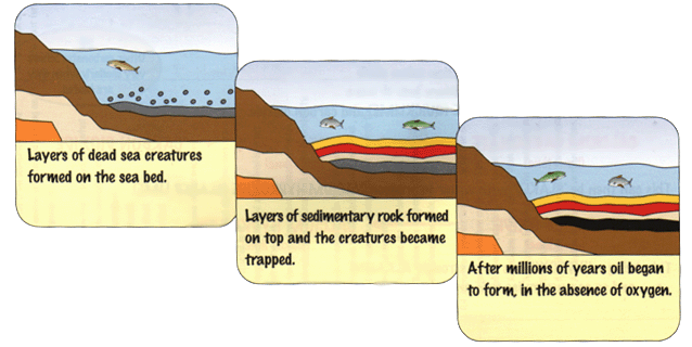 How crude oil is formed. - A-Level Geography - Marked by Teachers.com