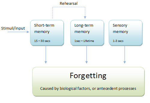 Multi Store Model And Working Memory Model A Level Psychology