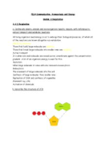 Respiration Revision Questions and Answers - A-Level Science - Marked ...