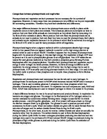 Custom Essay Paper Page  Zoom In Health Awareness Essay also Health And Wellness Essay Comparison Between Photosynthesis And Respiration  Alevel  E Business Essay