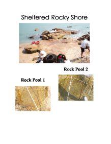 rocky shore essay