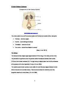 essay questions on urinary system