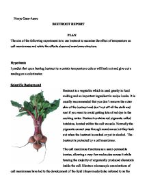 Beetroot Practical Write up