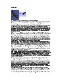 Bald Eagles And Golden Eagles Essay Research